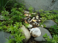 sweet woodruff and seashells